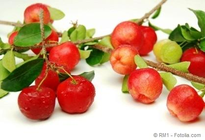 Branches with fruit of acerola,