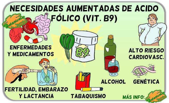 necesidades aumentadas de acido folico vitamina b9