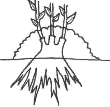 Reproduccion asexual de las plantas acodo terrestre