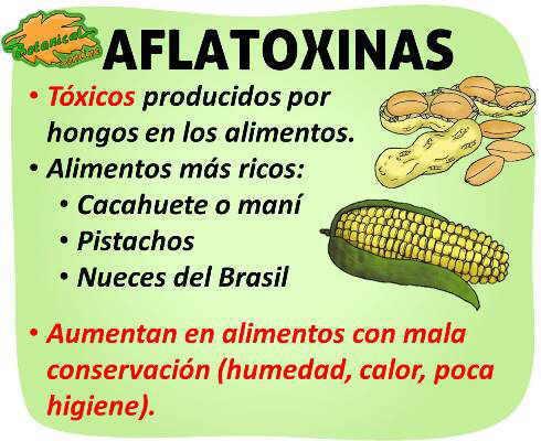 propiedades de las aflatoxinas