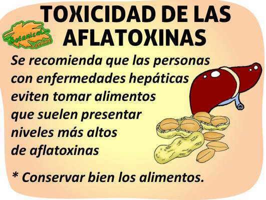 toxicidad peligros de las aflatoxinas
