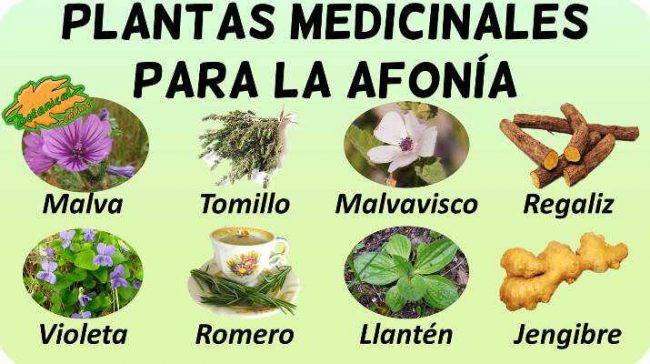 afonia tratamiento natural y remedios caseros con plantas medicinales