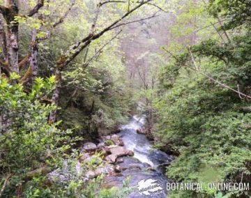agua rio naturaleza
