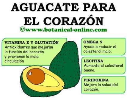 Aguacate corazon, omega 9, piridoxina, vitamina e, colesterol, glutation