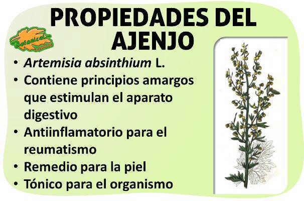 Propiedades medicinales del ajenjo artemisia absinthium