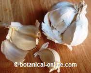 Suplementos de ginseng parar la menopasa