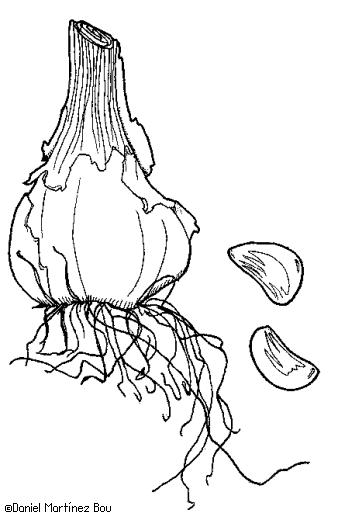 Dibujos de verduras y hortalizas