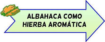 hierbas aromaticas albahaca