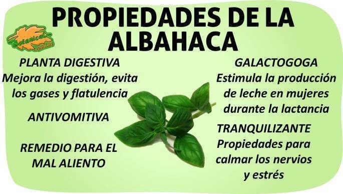 propiedades de la albahaca