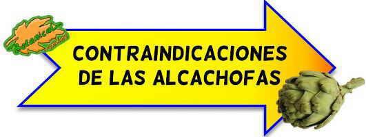 contraindicaciones alcachofas