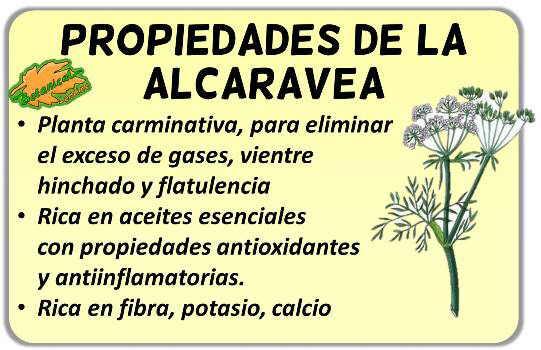 propiedades alcaravea carum carvi planta medicinal carminativa