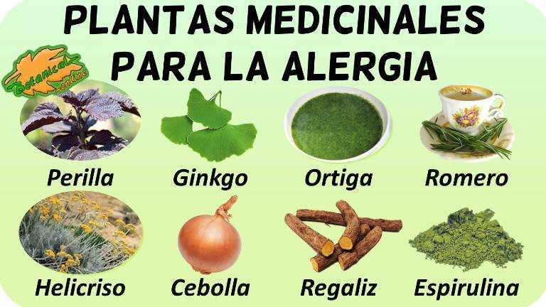 alergia tratamiento natural infusiones plantas