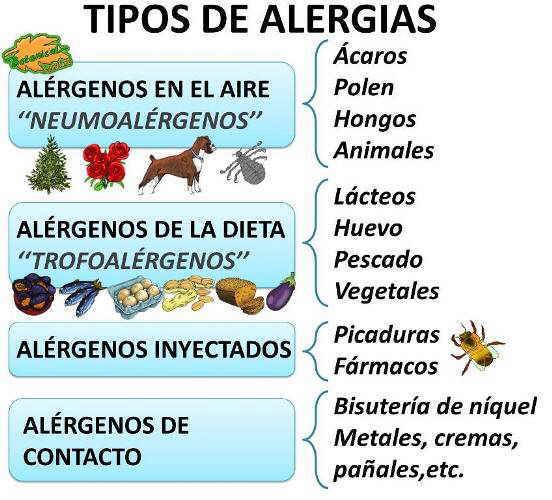 tipos de alergias al polvo polen acaros animales alimentos bisuteria y otros alergenos