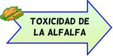 toxicidad de la alfalfa