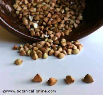 granos alforfon o trigo sarraceno