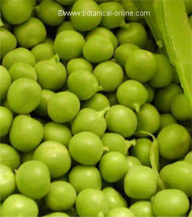 foto de guisantes verdes