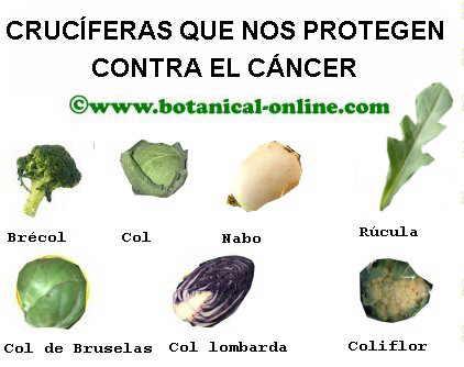 Alimentos cruciferas contra el cáncer