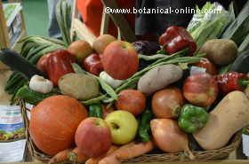 alimentos ecoloógicos
