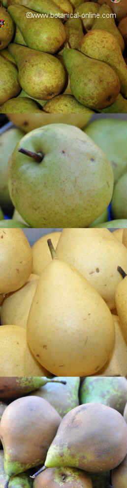 Variedades de peras