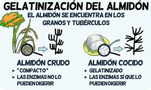 gelatinizacion del almidon crudo a cocido