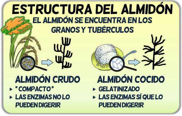 estructura del almidon tipos resistente granos tuberculos gelatinizado