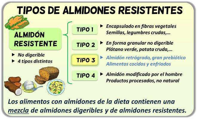 tipos de almidones resistentes almidon resistente fibra
