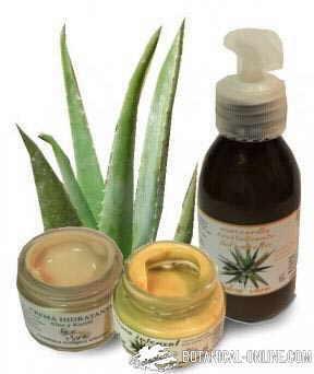 aloeplant aloe vera productos cosmetica natural