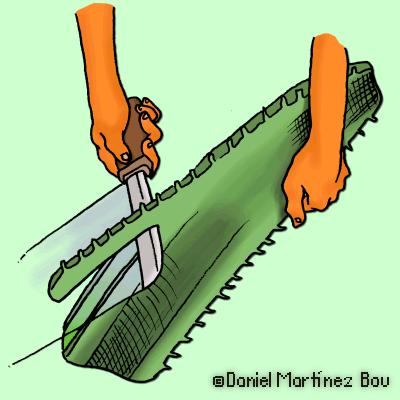 Quitar el borde espinoso