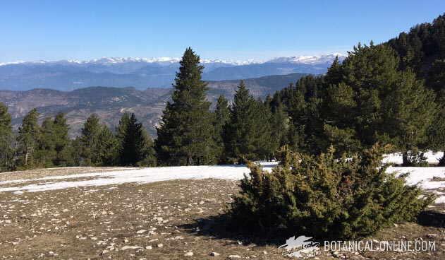 Cadí Moixeró visto desde la estación de esquí de Tuixent-La Vansa