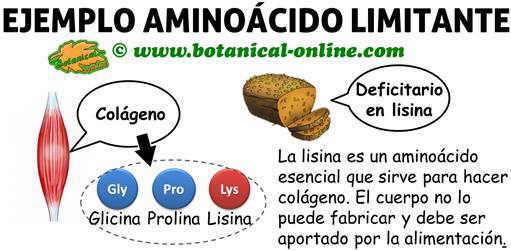 ejemplo de aminoacido limitante de los cereales