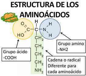 estructura quimica de los aminoacidos