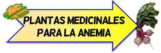 plantas medicinales anemia