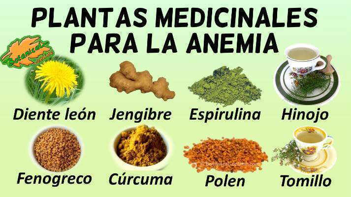 Remedios naturales caseros para la anemia
