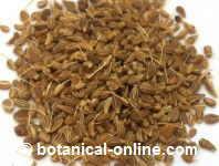 Remedios con plantas medicinales para los piojos - Como se quitan las manchas de aceite ...