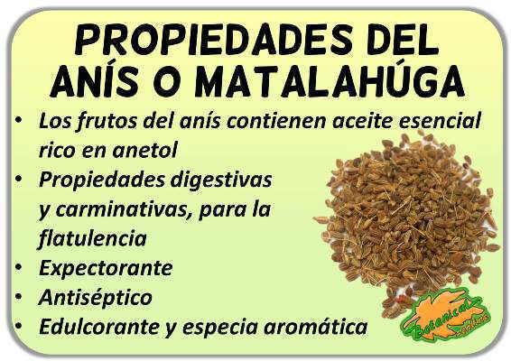 propiedades del anis verde o matalahuga y sus beneficios