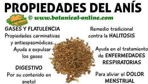 propiedades del anis, planta medicinal