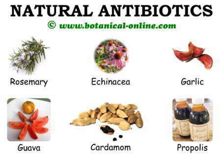 Natural antibiotics plants and foods