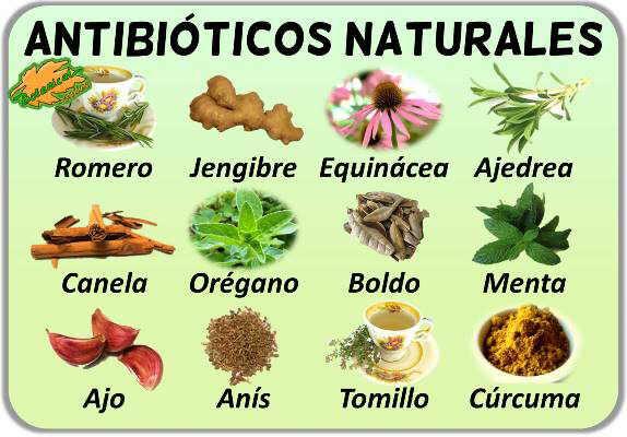 Remedios antibioticos naturales con plantas medicinales