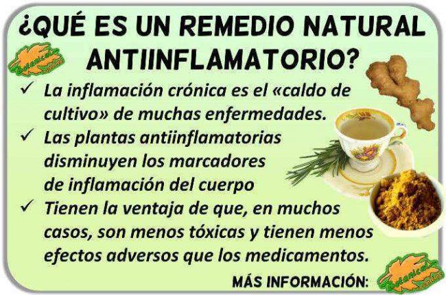 plantas antiinflamatorios naturales remedios