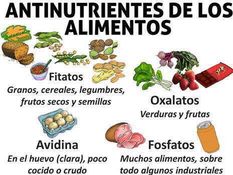 antinutrientes de los alimentos, legumbres, cereales verduras. Fitatos, oxalatos, fosfatos