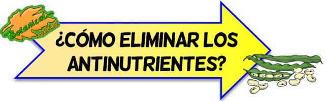 eliminar antinutrientes