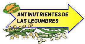 antinutrientes de las legumbres