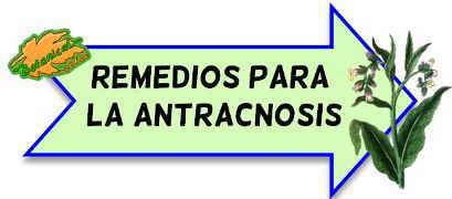 remedios antracnosis