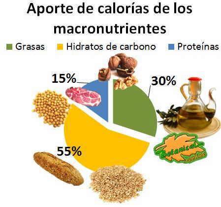 aporte calorias nutrientes dieta
