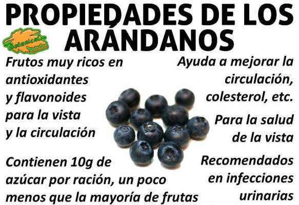 propiedades medicinales, curativas y beneficios de los arandanos