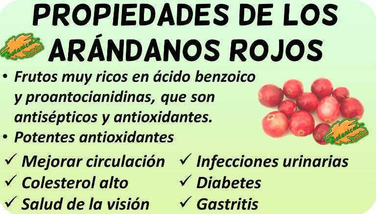 propiedades de los arandanos rojos cranberry y sus beneficios