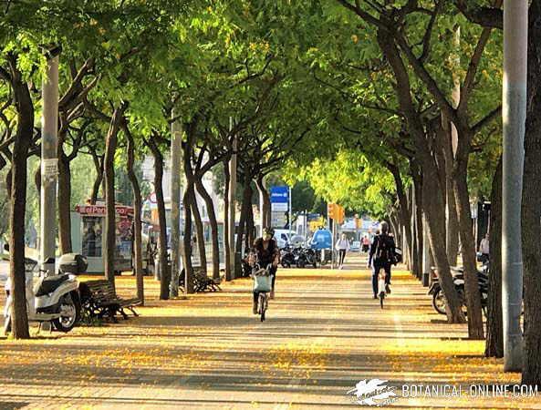 ciudad avenida de arboles
