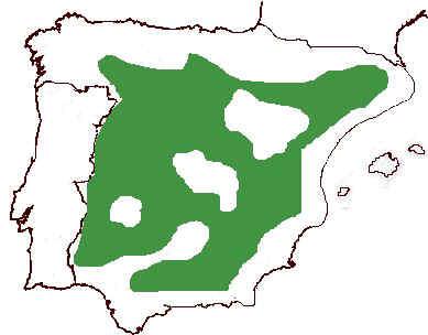 Area de distribución de la carrasca