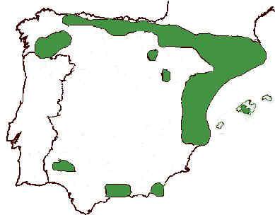 area distribucion encina