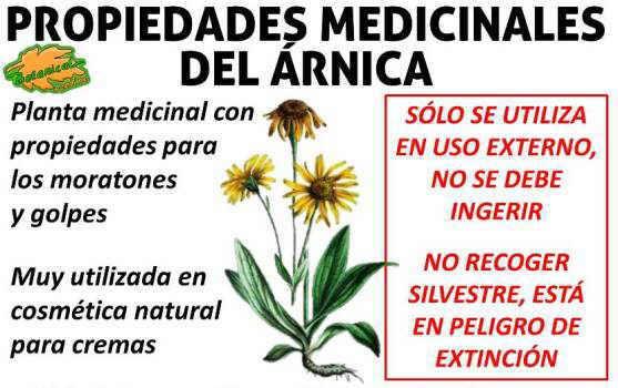 propiedades medicinales del arnica